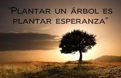 Plantar un árbol; plantar una esperanza