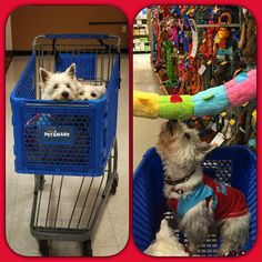 Next stop at the day of Preston is @petsmart to pick out a new toy!