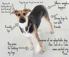 Diagram of an Adoptable Dog. What an adorable concept. I. Love. This.