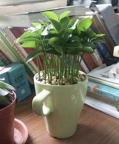 hojas de limonero en una taza