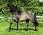 grullo stallion 3 by *venomxbaby on deviantART