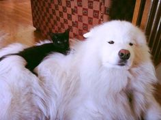 A black cat and her dog.