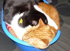 Tigret i Lola #gato #veterinario www.veterinariogatos.com