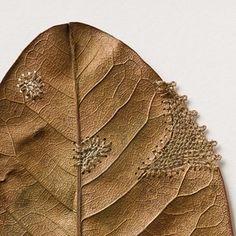 Restoration (detail) - Fragile Crocheted Leaf Sculptures by Susanna Bauer