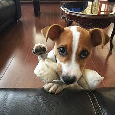 """""""Hi there I'm just here with my bone."""""""