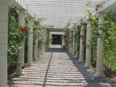 Rose  tressel, Yaddo Gardens
