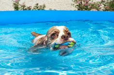 7 Ways To Keep Your Pooch Cool This Summer