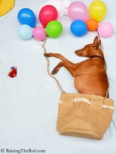 Rufus, le chien qui se transforme en d'incroyables personnages dès qu'il s'endort
