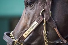 Always Dreaming before the Preakness