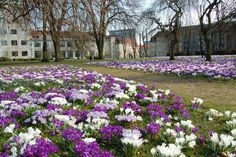 Aarhus spring