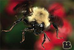 pollinators help the garden grow