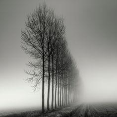 early mornings, winter trees, landscape photos, art, pierr pellegrini, black white, landscape photography, beauti, photographi