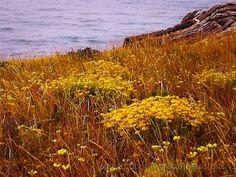 ...e um jardim à beira mar! Plants, Seaside, Natural Landscaping, Garden, Fotografia, Pictures, Planters, Plant