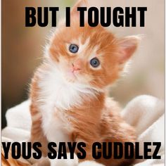 it) submitted by Margaret_Poston to /r/kitty 0 comments original - - Cute Kittens - LOL Memes - in Clothes - Kitty Breeds - Sweet Animal Pictures Kittens And Puppies, Cute Cats And Kittens, Kittens Cutest, Pretty Cats, Beautiful Cats, Animals Beautiful, Pretty Kitty, Cute Baby Animals, Funny Animals