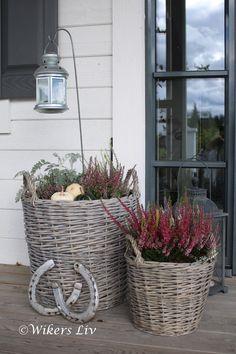 Wikers liv: Höst på vår porch...