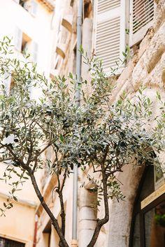 Olive tree 8x12 - Fine Art Photography Provence French photos Wall Decor Office Art France Travel photo Photography Decoration
