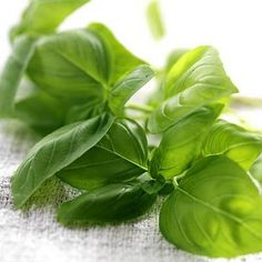12 Healthy Herbs to Grow (and Eat) at Home