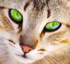 Chat aux yeux verts!