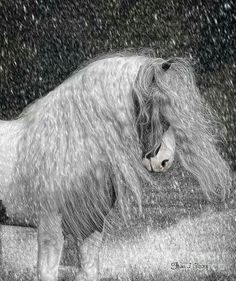 Gypsy Horses Digital Art - Nor Easter by Fran J Scott Unicorn Horse, My Horse, Horse Art, Majestic Horse, Beautiful Horses, Animals Beautiful, Magnificent Beasts, All About Horses, White Horses