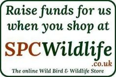Do you shop at spc wildlife? Why not choose us as the charity to help raise 5% of your sale through shopping online.  http://ift.tt/2dqQEvC  #spcwildlife #wildlife #rasingfunds #fundraising #charity #animal #animalshelter #birds