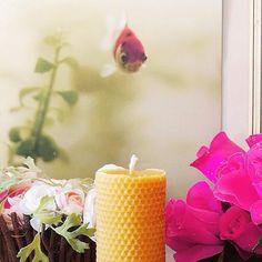 "Ma nouvelle copine Ambroise. Merci à @apiscera  ( @maiwennnicolas ) - merci Maïwenn !! Thanks to the great photographer! ☀️❤️ #photo #bougie #candle #handmade #photography #aquarium #closeup #flowers #beeswax #ciredabeill #composition #naturemorte #fleur #honeycomb #nidabeille #ruche #craftsmanship www.apiscera.com"""