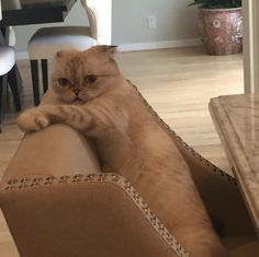 You seem stressed. #Cat -Taylor Swift-