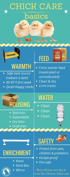 Chick Care Basics http://www.The-Chicken-Chick.com