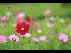 Abraham Hicks ~ Experience immediate thriving