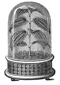gardens art Vintage Images - Amazing Cloche with Plant Vintage Images Cloche Plant Black White Garden Engraving Vintage Labels, Vintage Ephemera, Engraving Illustration, Illustration Art, Vintage Botanical Prints, The Bell Jar, Graphics Fairy, White Gardens, Fauna