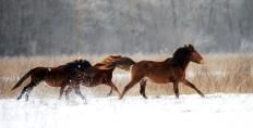The Letea Wild Horses - also what i do for a living ;)