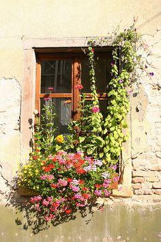 Window Flowers Speyer Germany