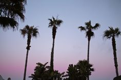 candy colored sky dotted with palms