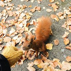 Végre péntek!  Ti mivel fogjátok tölteni a hétvégét? #weekend #friday #chill #autumn #squirrel #coldoutside #ellehungary #elle via ELLE HUNGARY MAGAZINE OFFICIAL INSTAGRAM - Fashion Campaigns  Haute Couture  Advertising  Editorial Photography  Magazine Cover Designs  Supermodels  Runway Models