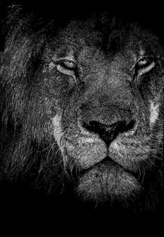 'Be Proud', art by Vicci Lee. Inspired by a photograph taken by IanZA on Pixabay. Pointillism Art, Animal Art, Lion Picture #lion #art #etsy