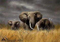 Elephants | ... ivoire des éléphants: L'éléphant africain ou Loxodonta africana