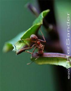 @OnTheWay #InsectsHer  www.hersander.com