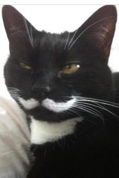 Cat sporting a 'stache!