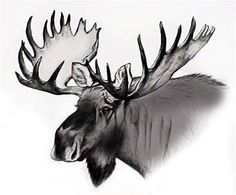 drawings of moose | New Hampshire & Vermont Moose Hunting Guide - Moose Country Guide ...