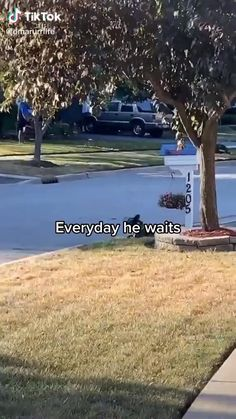 Funny Dog Videos, Funny Animal Memes, Cute Funny Dogs, Cute Funny Animals, Cute Animal Videos, Cute Animal Pictures, Cute Dogs And Puppies, Doggies, Cute Stories