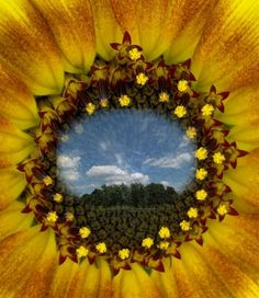 """Double exposure Contest entry  """"Sunflower's View"""""""