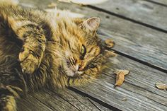 10 Reasons Cats Are Better Than Dogs