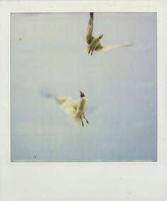 #polaroid by Mikael Kennedy.