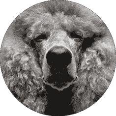 Stream and Dream - mo° sound Kugellautsprecher Audio Speakers, Grandchildren, Technology, Dogs, Animals, Speakers, Tech, Animales, Animaux
