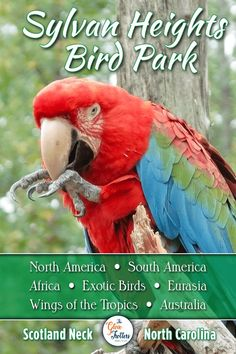 Did you know that North Carolina has an exotic bird park which holds the largest collection of waterfowl species in the world? Birds from all continents are found here and there's even an area where you can feed the parakeets. Rare Birds, Exotic Birds, Outer Banks Beach, Visit Nc, All Continents, World Birds, Different Birds, Small Ponds