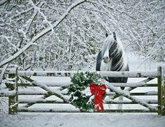 Beauty. Merry Christmas
