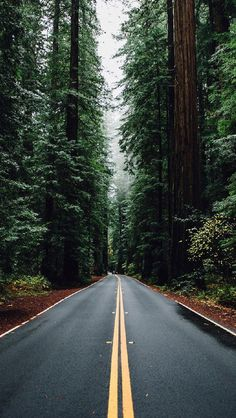 Green Forest Road Tall Trees iPhone 5 Wallpaper