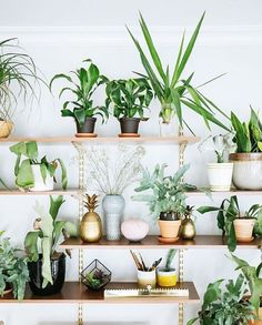the ultimate plant shelfie /