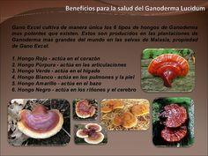 Beneficios Para La Salud Del Ganoderma Lucidum Anorexia, Healthy Life, Benefit, Breakfast, Ayurveda, Food, Wellness, English, World