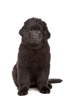 100 Best The Dogs of Local Puppy Breeders! images in 2014