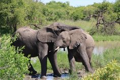 love elephants | south africa | linewithline